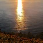 Volastra:  fra vini e oli pregiati il borgo segreto delle Cinque Terre