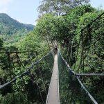 Il Taman Negara: Parco Nazionale della Malesia