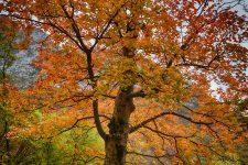 foliage-04