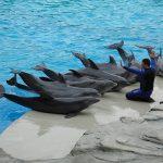 Un tuffo nei parchi acquatici della Riviera Romagnola con tutta la famiglia