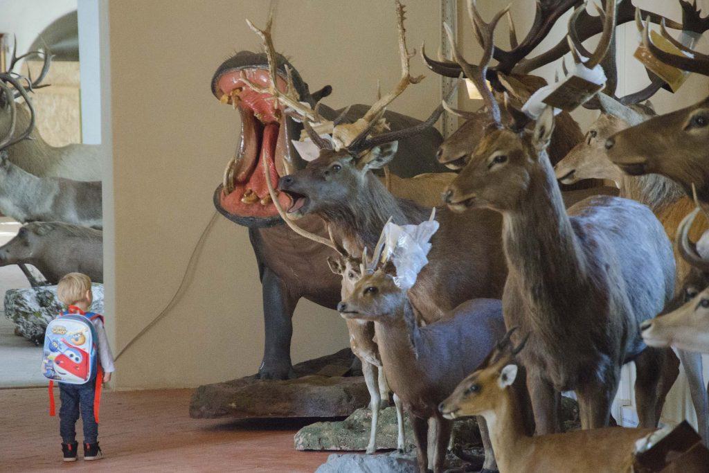 calci-museo-storia-naturale