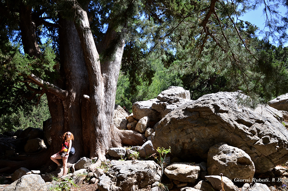 Gole di Samaria, Creta, patriarca