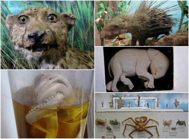 Maputo, museo etnografico, animali imbalsamati
