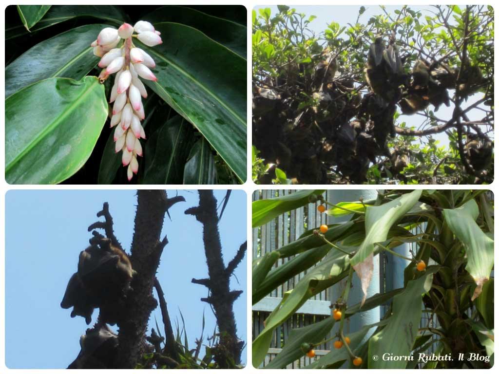 Jardim Tunduru, Maputo: piante e pipistrelli
