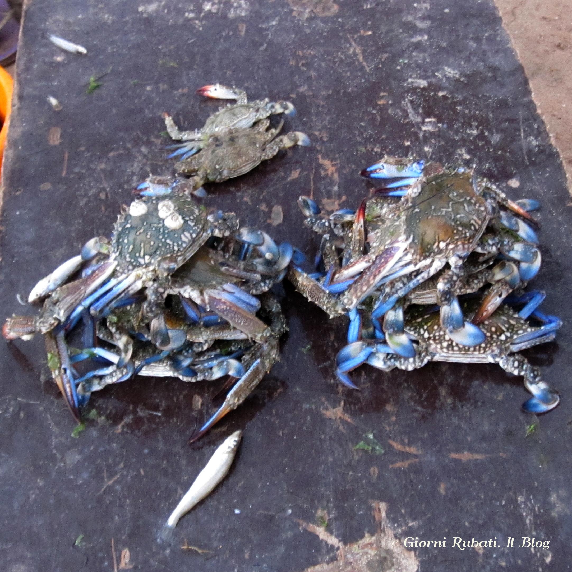 Granchi appena pescati, Maputo