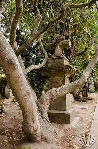 San Francisco, Mission Dolores, cimitero