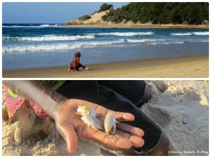 Mozambico, Tofo: caccia sulla battigia
