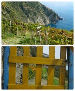 Campiglia, La Spezia, i terrazzamenti