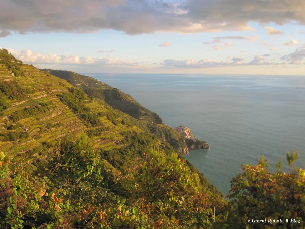 Volastra, vigneti sul mare. Cinque Terre