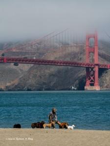 Dog Sitter Golden Gate, San Francisco