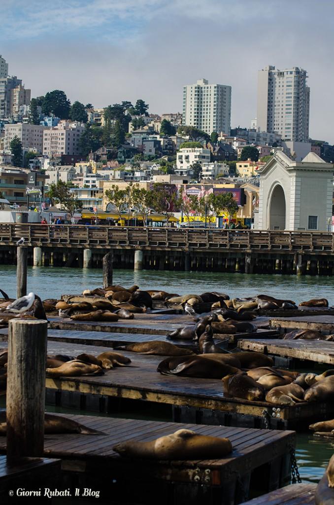 San Francisco, leoni marini al Pier 39