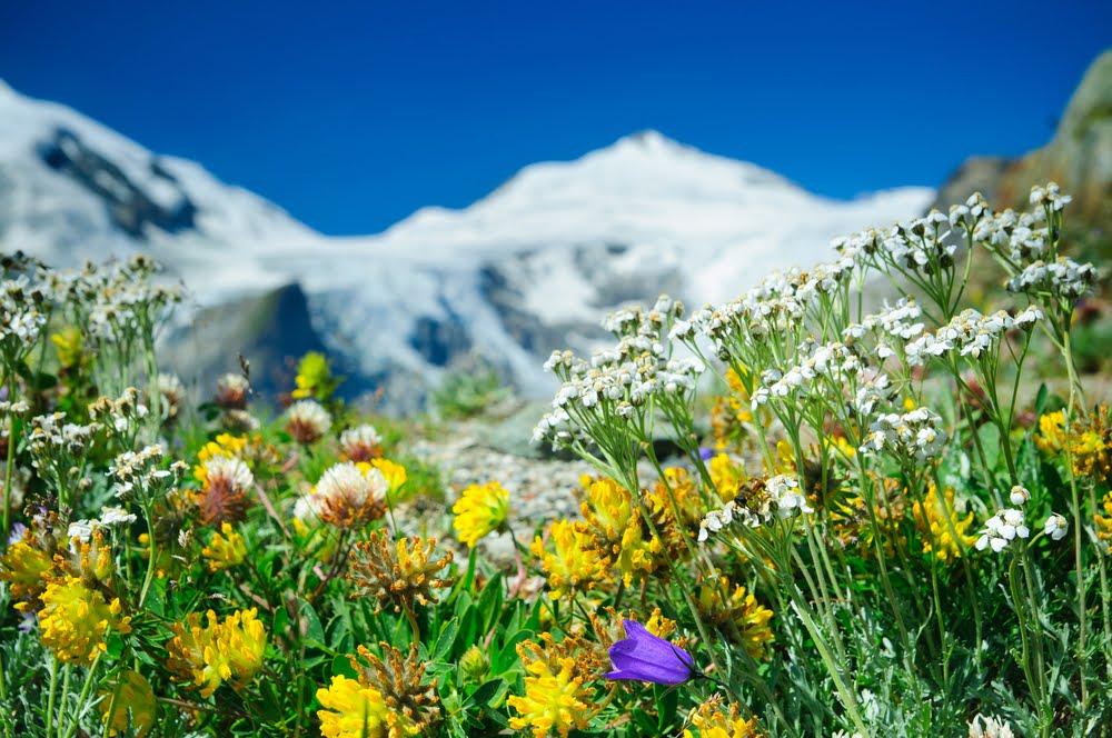 Austria: esperienze indimenticabili fra natura, cultura e buona cucina