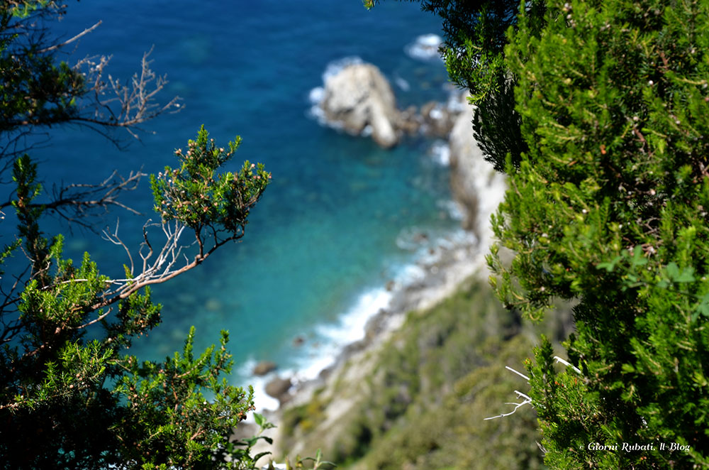 """C'era una volta una gatta… a picco sul mare blu. Camminando fra Levanto e Monterosso per il """"WeLevanto"""""""