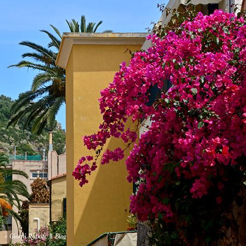 Il fiore simbolo dell'estate: la bouganville