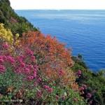 Il mare segreto della Spezia.  6 percorsi inconsueti che mettono d'accordo amanti del mare… e della montagna!