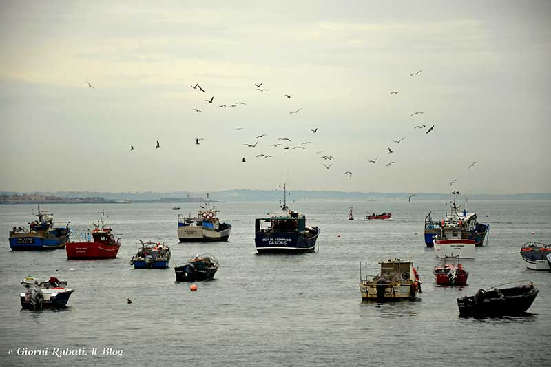 Cascais, le barche, il mare, i gabbiani