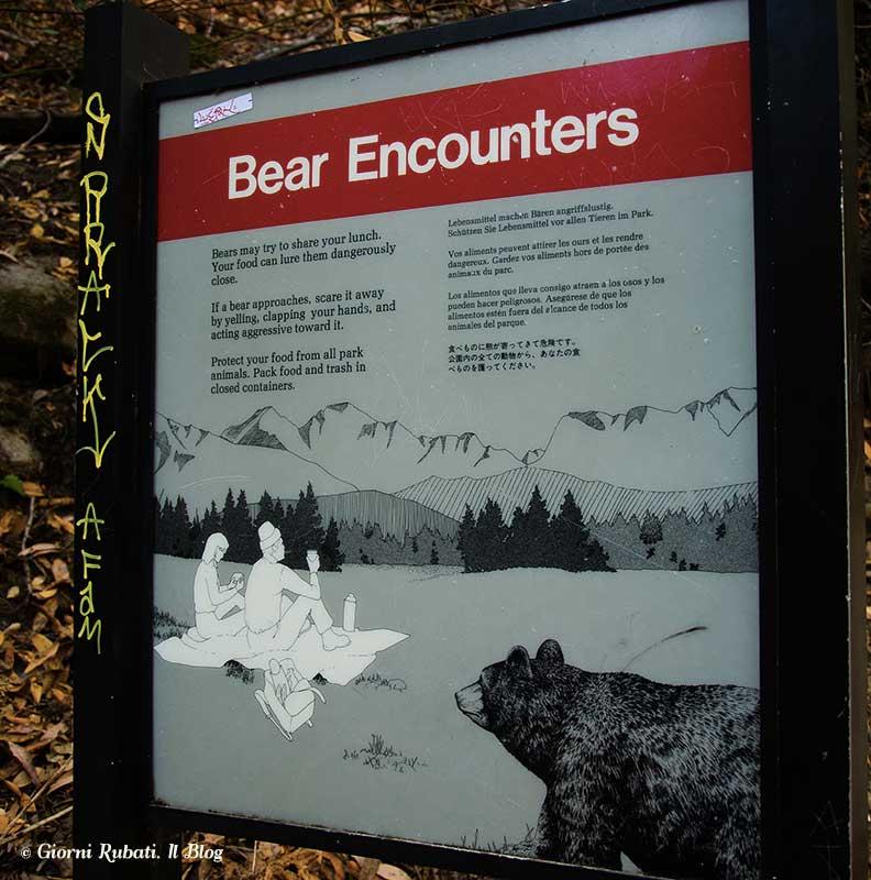 Daniza e Yoghi. L'orso in Trentino e nei parchi nazionali americani