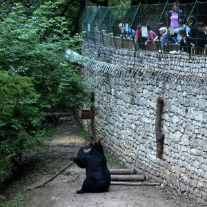Santuario di San Romedio: l'orso emblema della leggenda