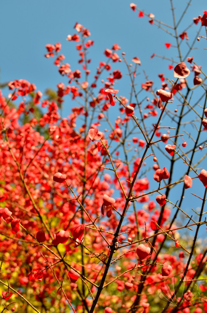 foliage02