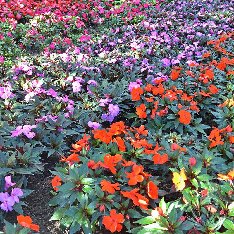 tappeto fiorito, Castel trauttmansdorff, Merano