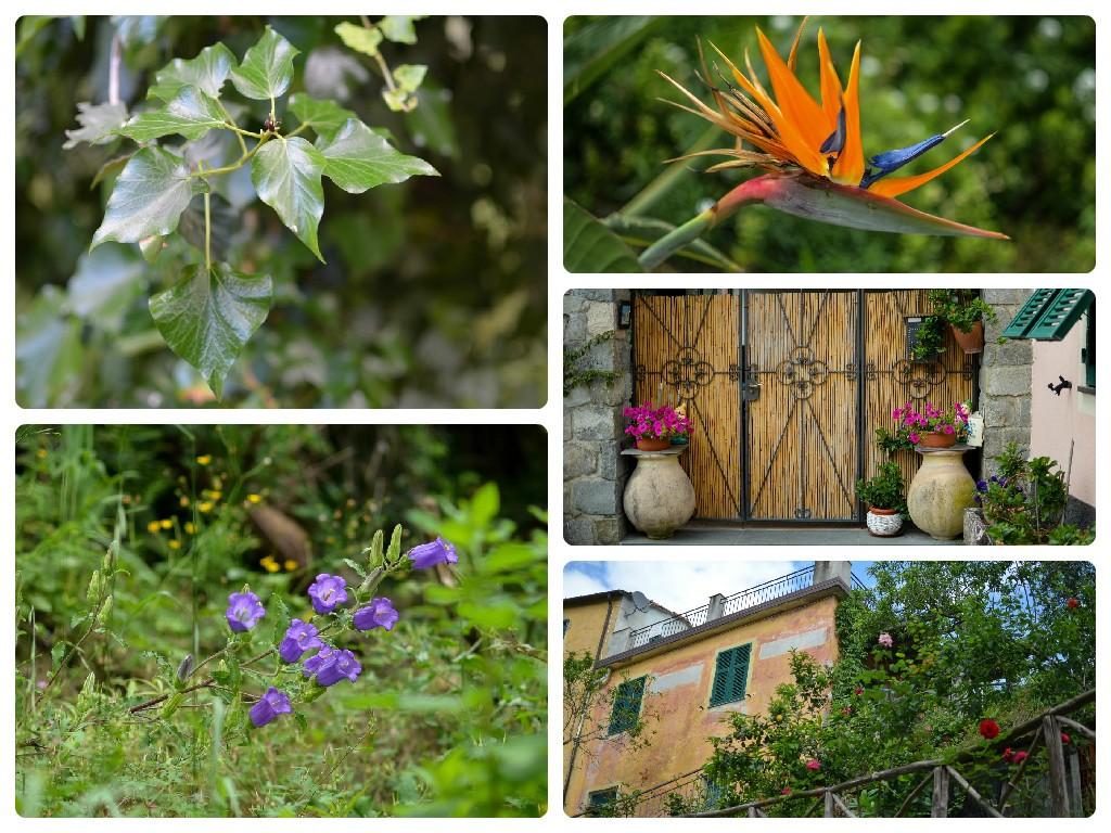 Mangialonga 2015, Levanto: frammenti di natura e villaggi