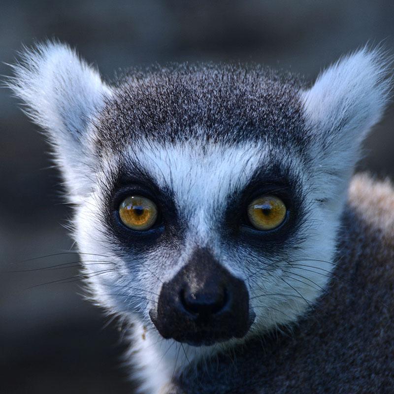 Parco zoo Punta verde, Lignano: una giornata nella natura con tutta la famiglia