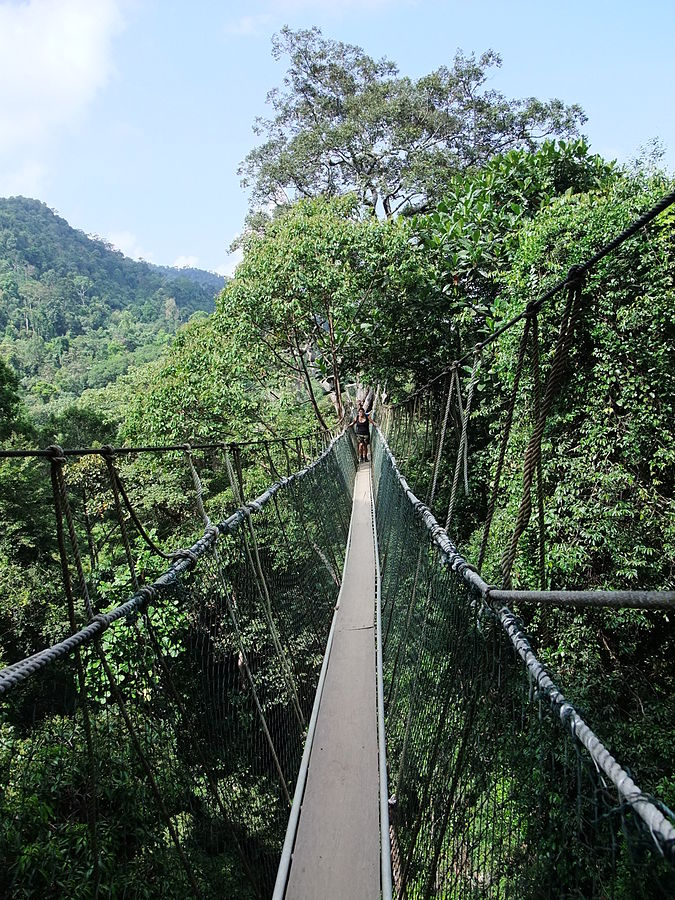 """Taman Negara Canopy Walkway"" by RoB - Own work. Licensed under CC BY-SA 3.0 via Commons - https://commons.wikimedia.org/wiki/File:Taman_Negara_Canopy_Walkway.JPG#/media/File:Taman_Negara_Canopy_Walkway.JPG"