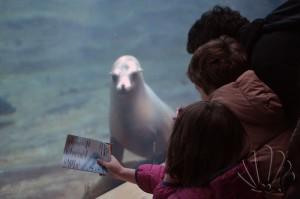 Oceanografìc, Valencia: foche e bambini