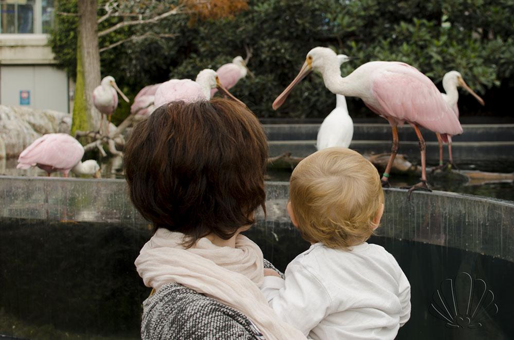 Oceanografìc, Valencia: oasi per uccelli acquatici