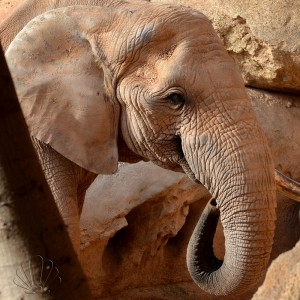 Bioparc, Valencia: un maestoso elefante