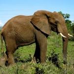 La mia Africa: safari al Kruger National Park