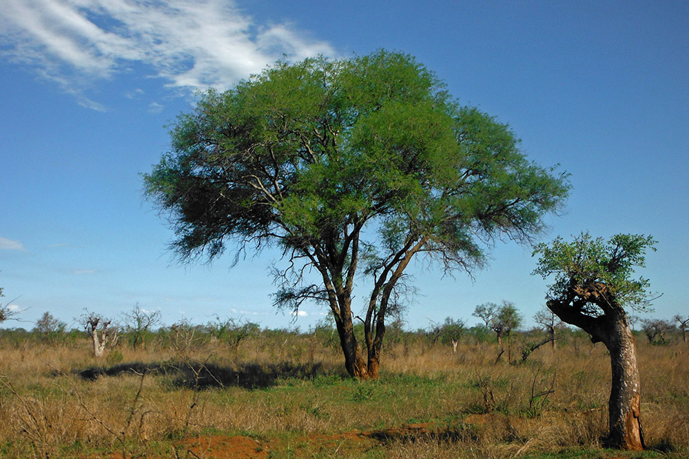 Kruger National Park: il respiro della savana. Sudafrica
