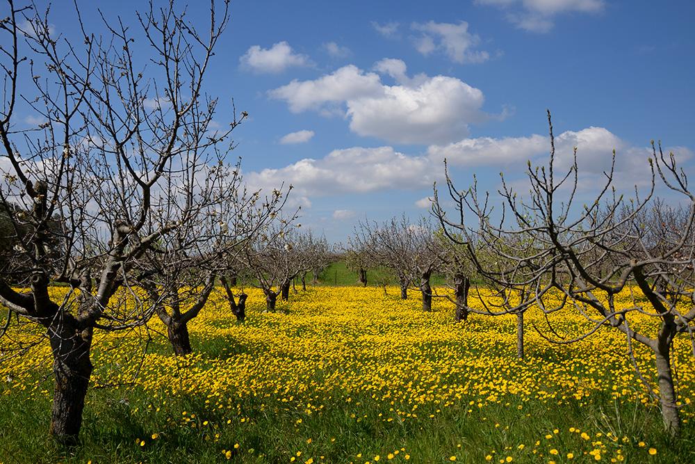 """Una visione riservata ai visitatori in primavera: l'""""agro"""" di Polignano in fiore"""