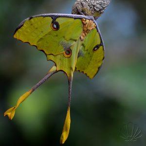 Un meraviglioso esemplare di farfalla tropicale appena schiusa