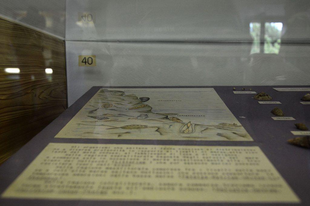 Museo delle conchiglie: un'illustrazione didattica