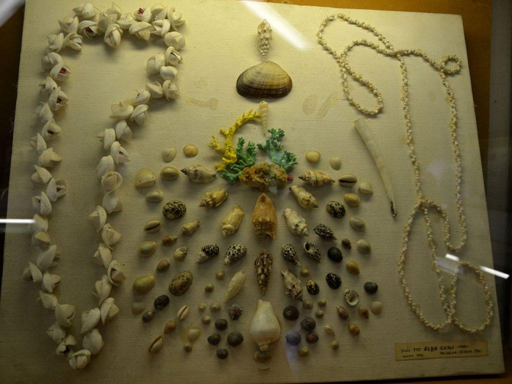Museo delle conchiglie di Bellaria