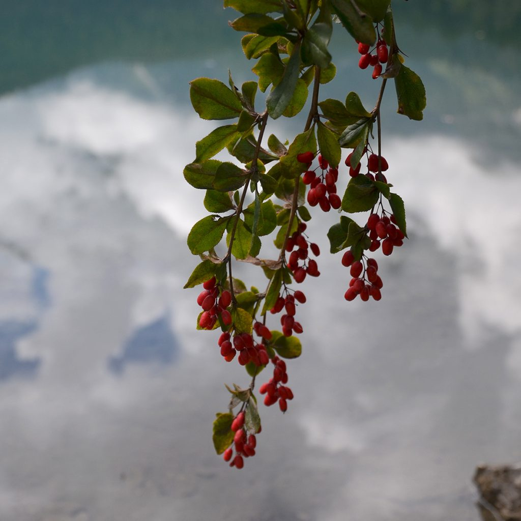 lago-di-tovel-2
