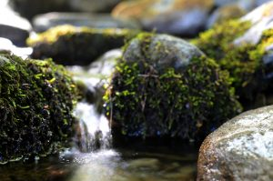 le prime gocce d'acqua del fiume Secchia...