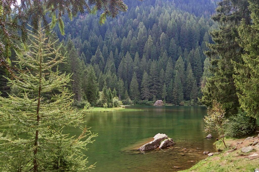 lago-dei-caprioli-conifere