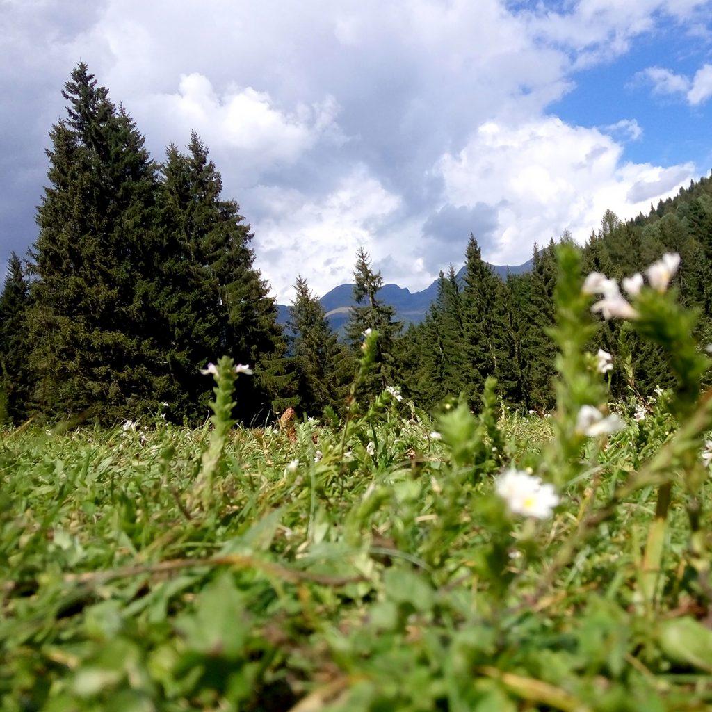 lago-dei-caprioli-fiori