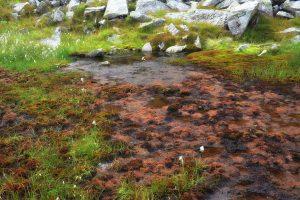 Lungo il sentiero ci si perde ad ammirare i colori delle torbiere...così nordici!