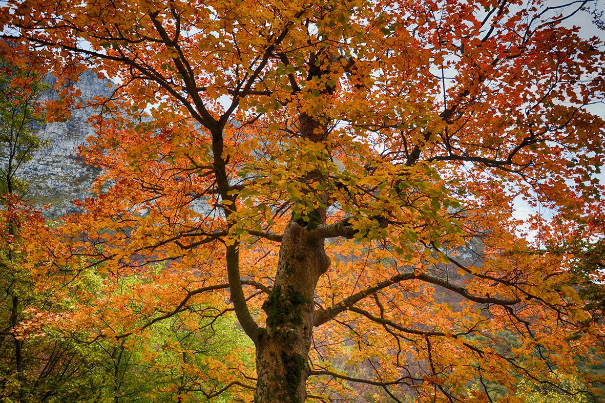 Ripartire dalla magia: la natura e gli animali ritrovati del Parco Nazionale dei Monti Sibillini (seconda parte)