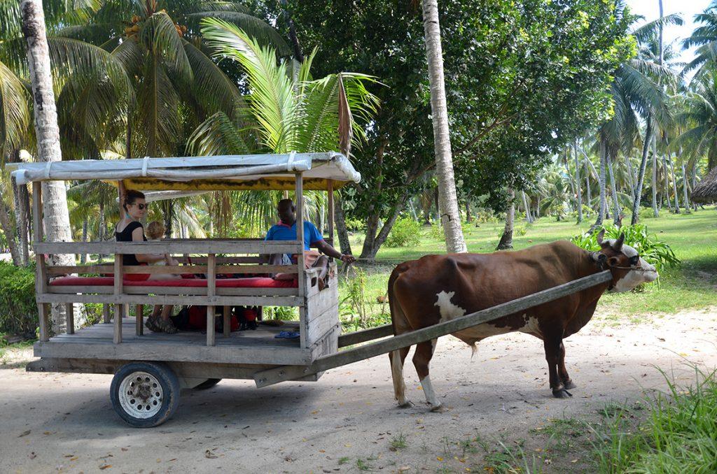 Il taxi dell'isola La Digue: ormai un'attrazione puramente turistica, ma che piace ai piccoli di casa!
