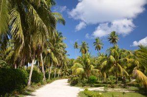 La Union Estate a La Digue: il posto giusto per conoscere animali, pinate, coltivazioni delle isole