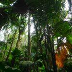 Piccola guida a piante e fiori di Seychelles