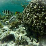 Snorkeling alle Seychelles: perché farlo e dove farlo