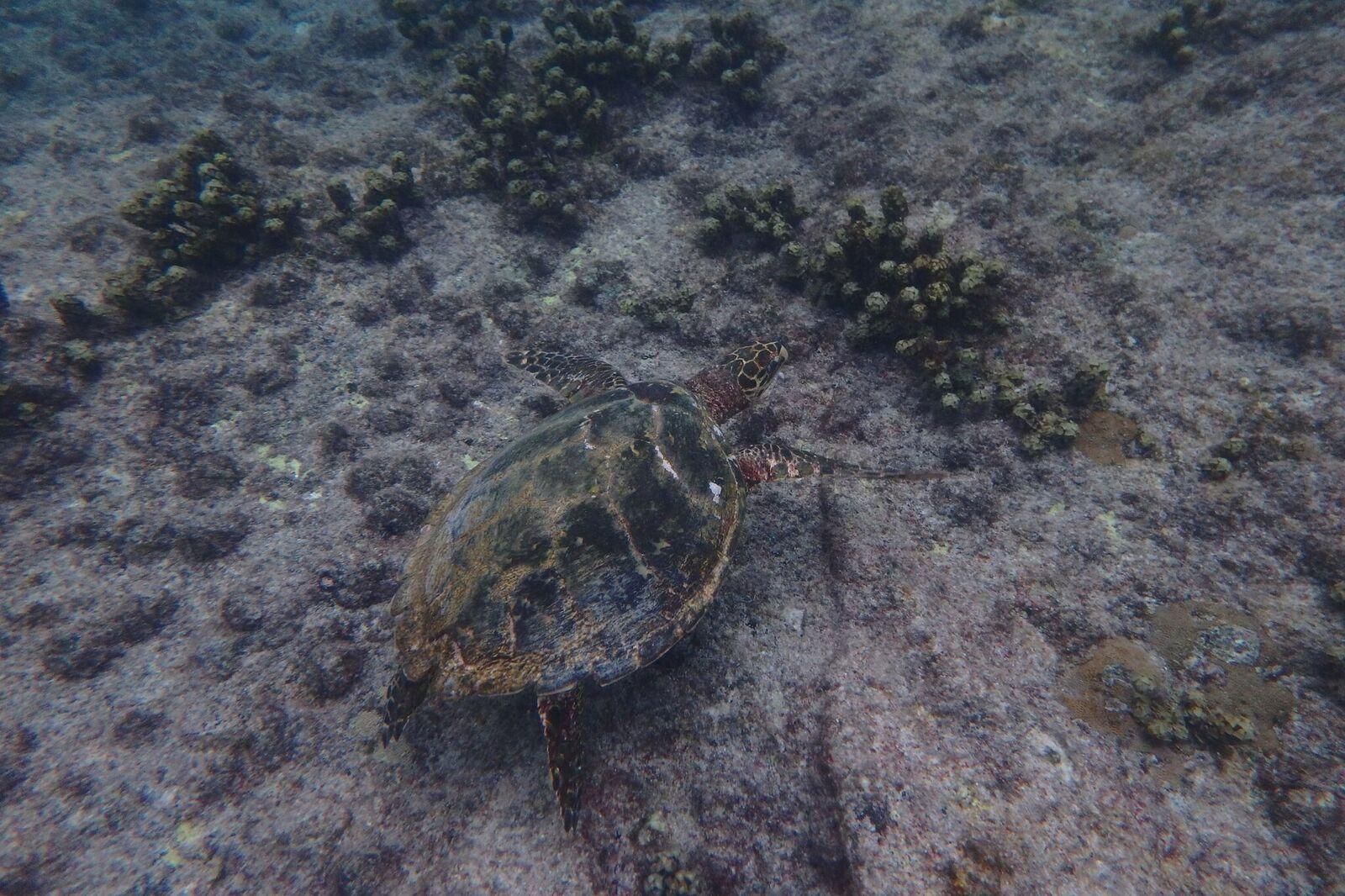 A Riccione con i bambini per liberare le tartarughe