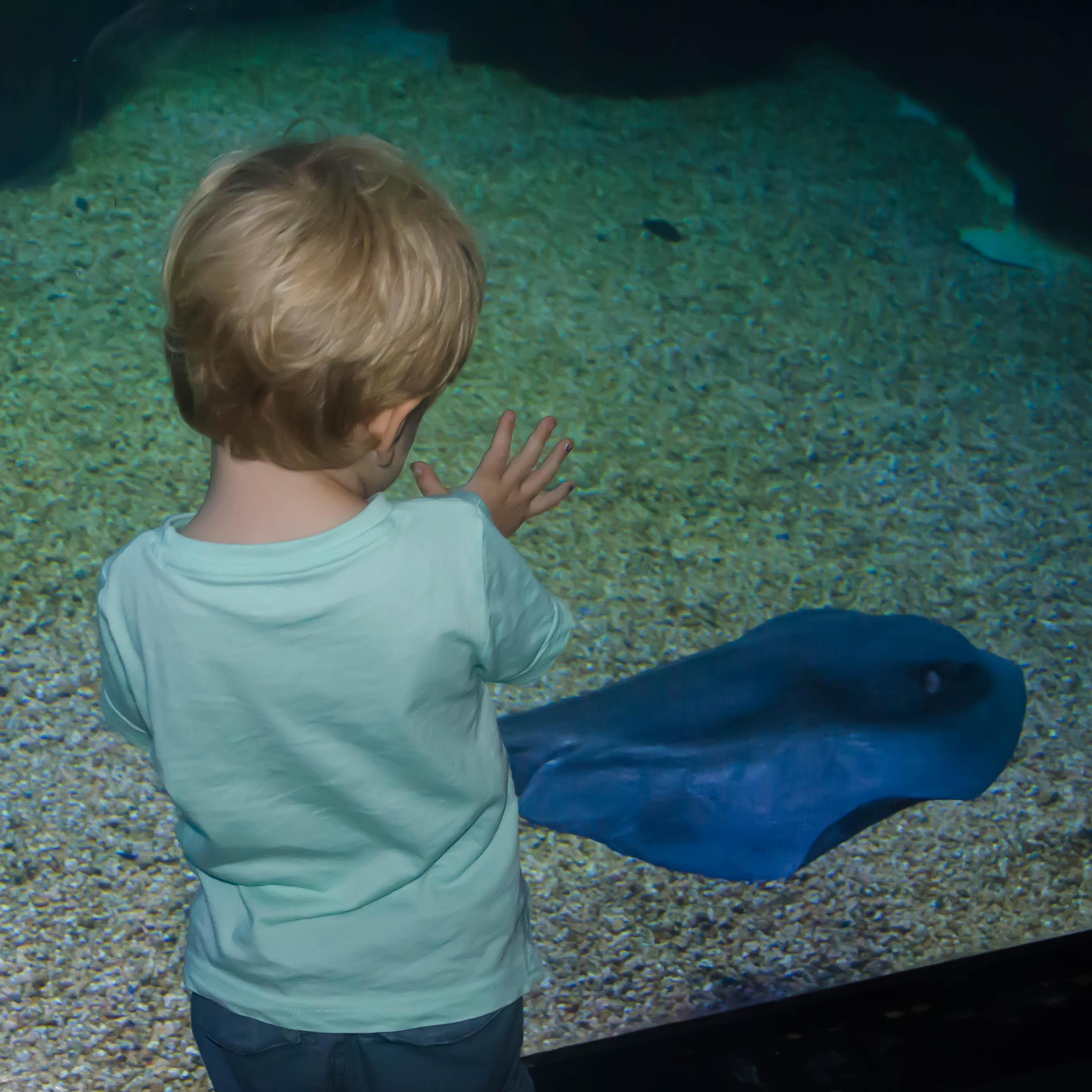 Mamma, cosa c'è sotto? Visita all'acquario di Cala Gonone con i bambini