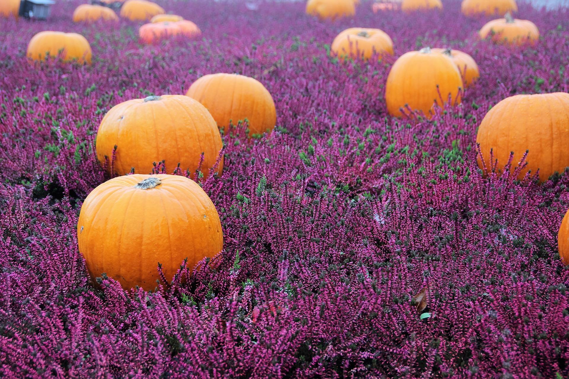 All-Hallows-Eve o giorno dei morti? Ecco a voi le tradizioni italiane più curiose