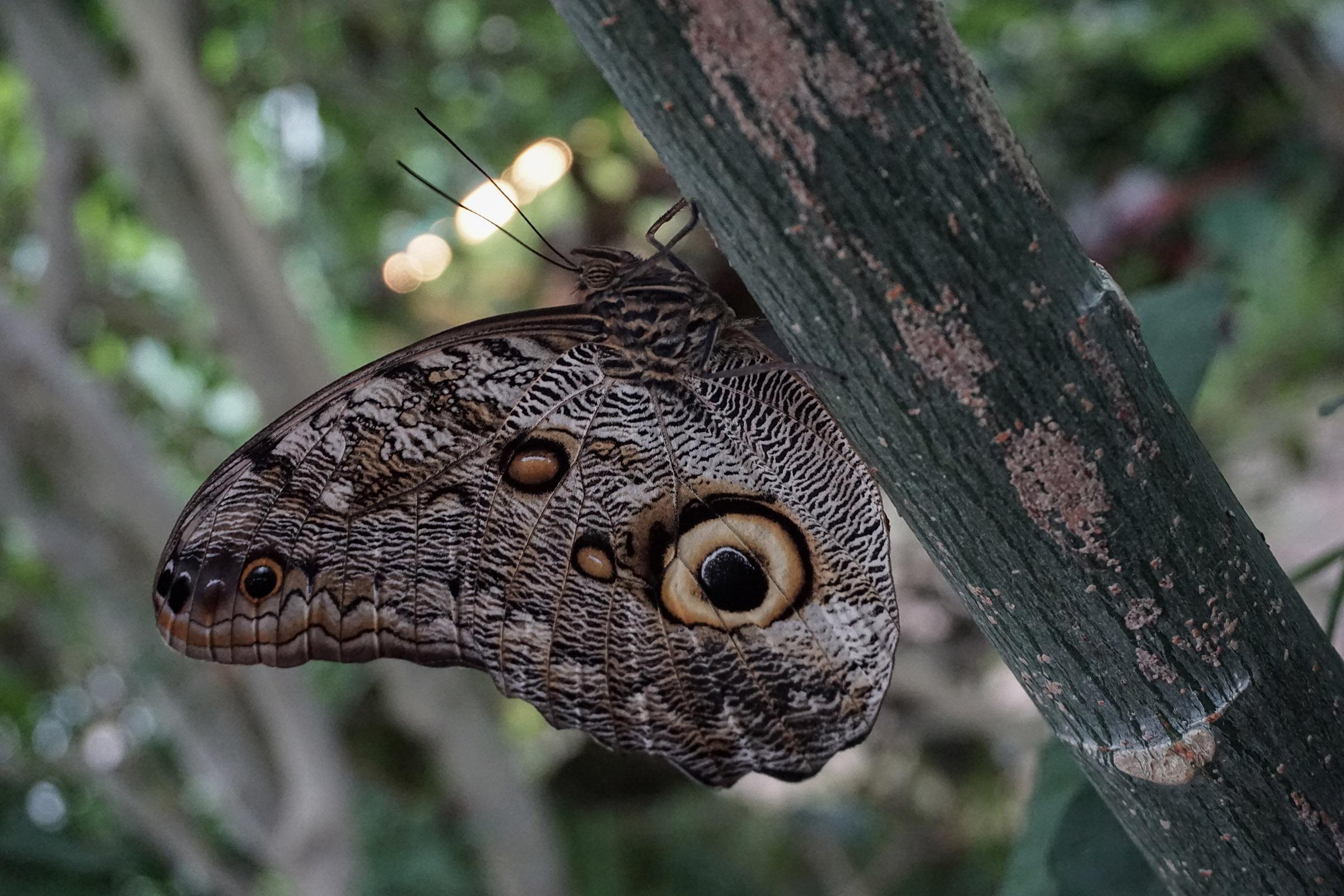Microcosmos: la casa delle farfalle di Milano Marittima